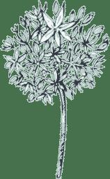 light opaque flower above branding text